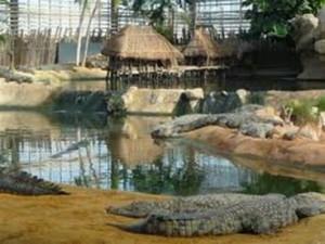 Ferme des crocodiles